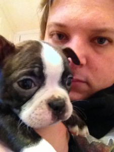 boston terrier_07