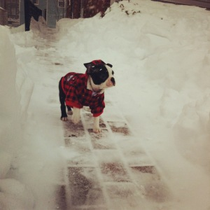 130209_kemper in the snow