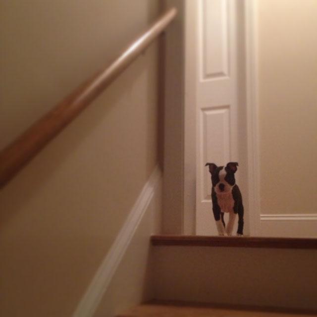 130221_Kemper at Stairs