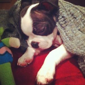 kemper asleep