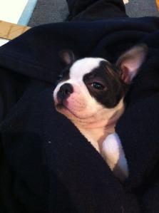 kemper cuddles