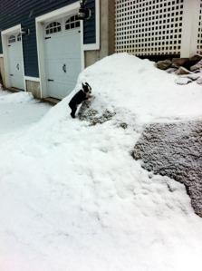 kemper outside on snowy rocks