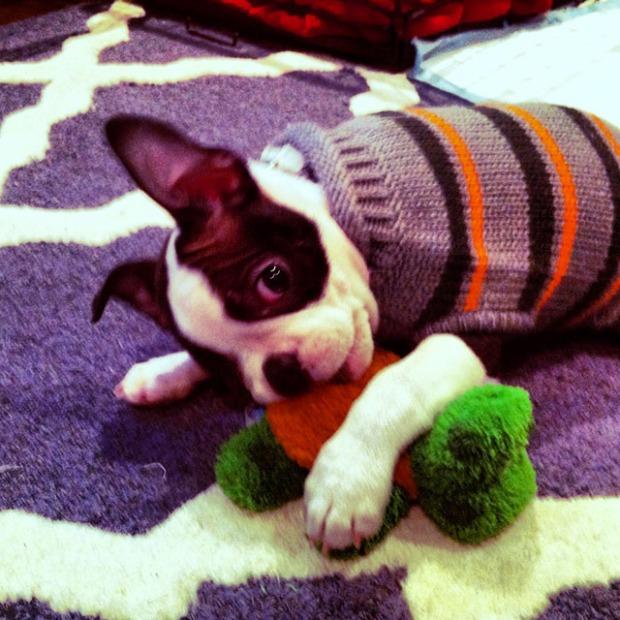 Kemper Puppy