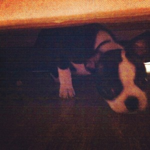 kemper under sofa