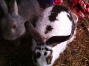 fuzzy bunnies