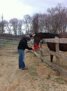 sweet meadow farms_horse_02