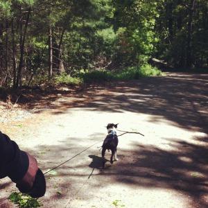 kemper on walk at blue hills