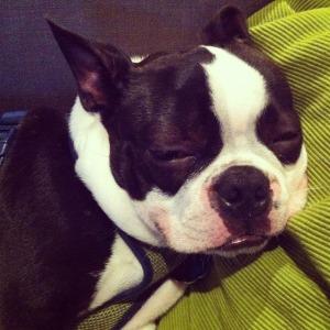 kemper dog face