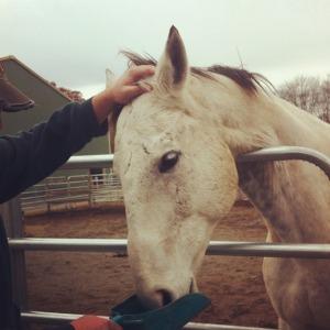 feeding horse_03