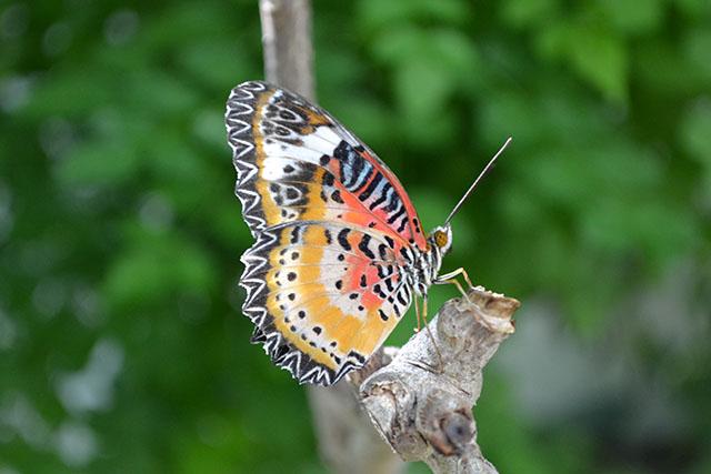 Key West Butterfly Conservatory_01