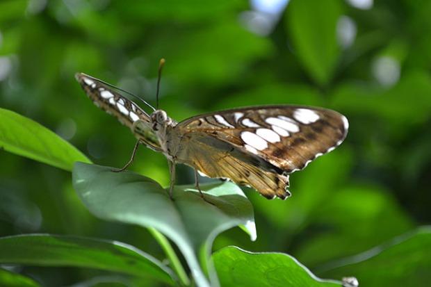 Key West Butterfly Conservatory_05