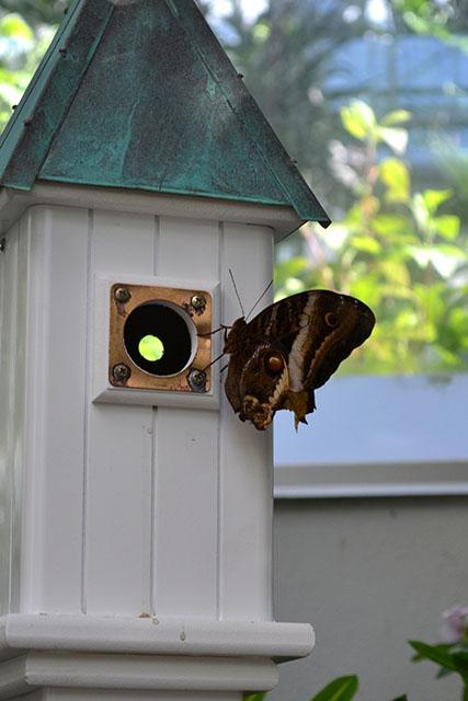Key West Butterfly Conservatory_06
