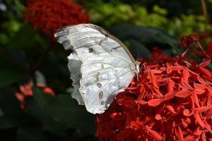Key West Butterfly Conservatory_07