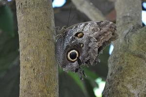 Key West Butterfly Conservatory_08
