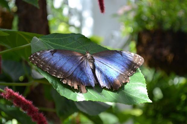 Key West Butterfly Conservatory_09