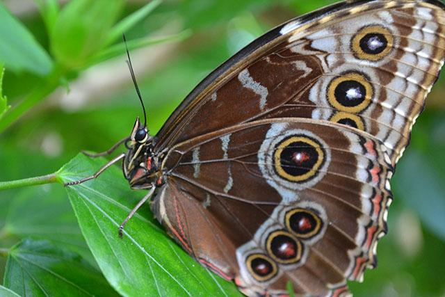 Key West Butterfly Conservatory_13