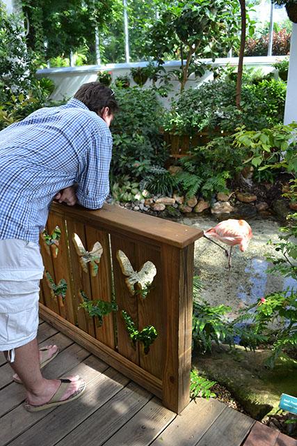 Key West Butterfly Conservatory_14