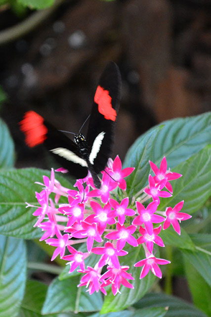 Key West Butterfly Conservatory_16