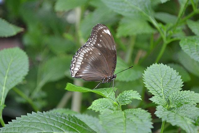 Key West Butterfly Conservatory_22