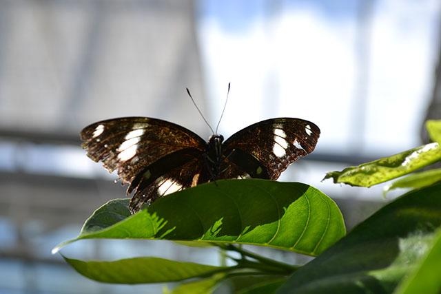 Key West Butterfly Conservatory_30