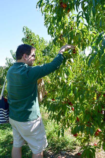 Apple Picking_Tougas Family Farm-16