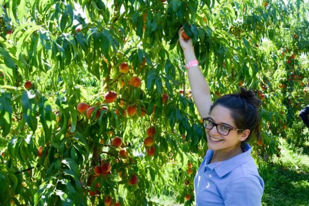 Apple Picking_Tougas Family Farm-22