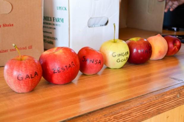 Apple Picking_Tougas Family Farm-4