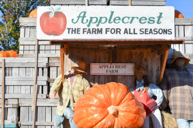 Apple Crest Farm Day-05