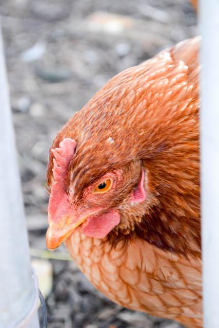 Apple Crest Farm Day-06