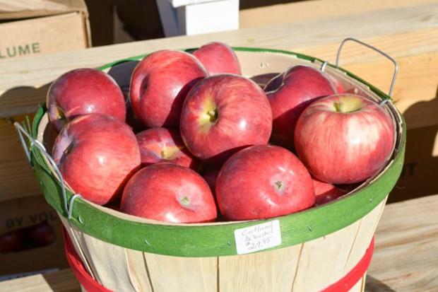 Apple Crest Farm Day-10