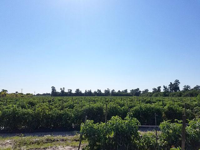 Tomato Picking_Apollo Beach_FL_13