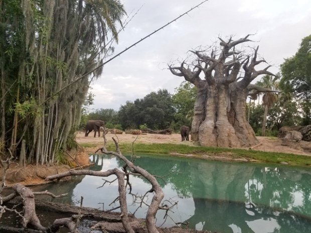 Disney Vacation_Wild Kingdom-38