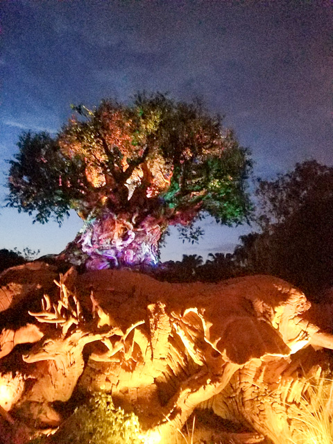 Disney Vacation_Wild Kingdom-42