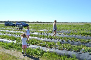 adventures-in-strawberry-picking_05